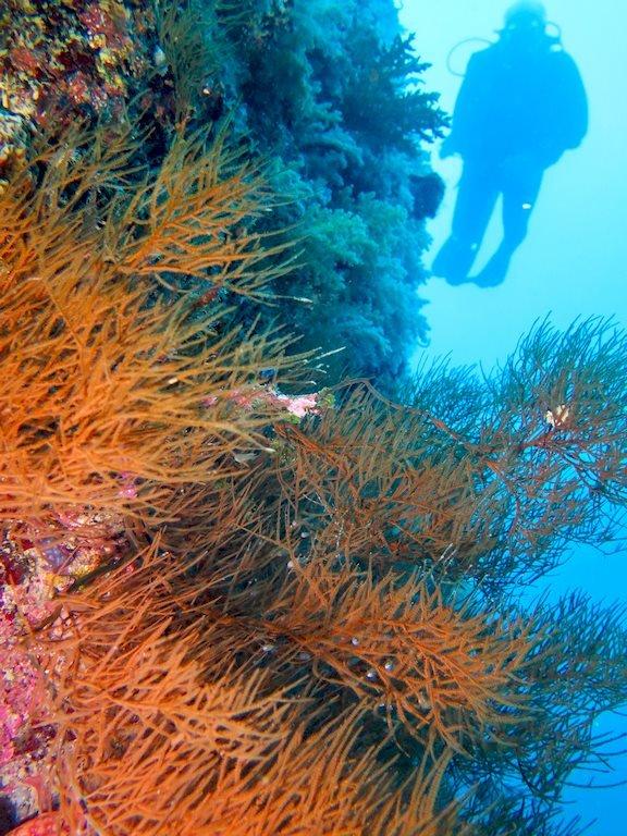 Tombants que l'on aperçoit en allant plonger à Mayotte