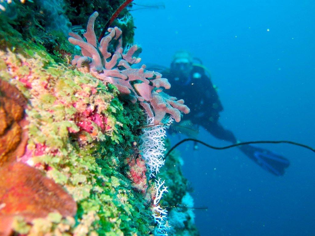 Un plongeur explore le tombant des aviateurs à Mayotte