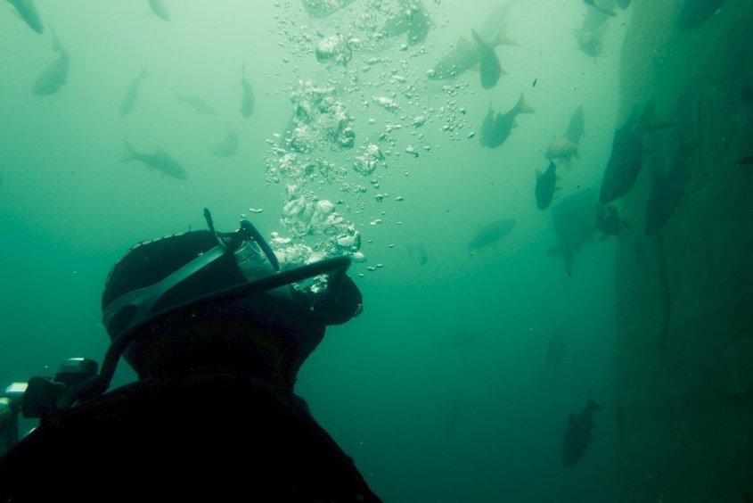Un plongeur regarde les poissons au-dessus de lui