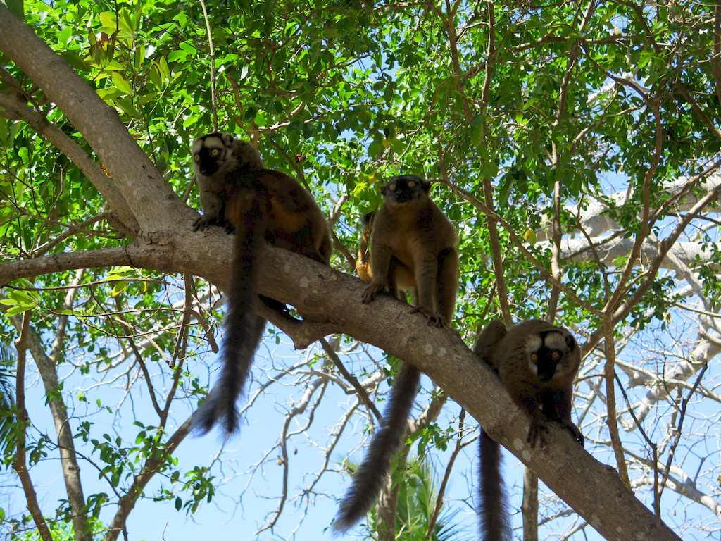 Plonger à Mayotte et en profiter pour regarder les lémuriens sur les branches des arbres.