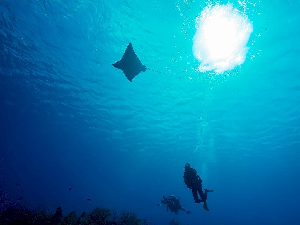 Plonger à Bonaire c'est découvrir une eau limpide et cristalline.