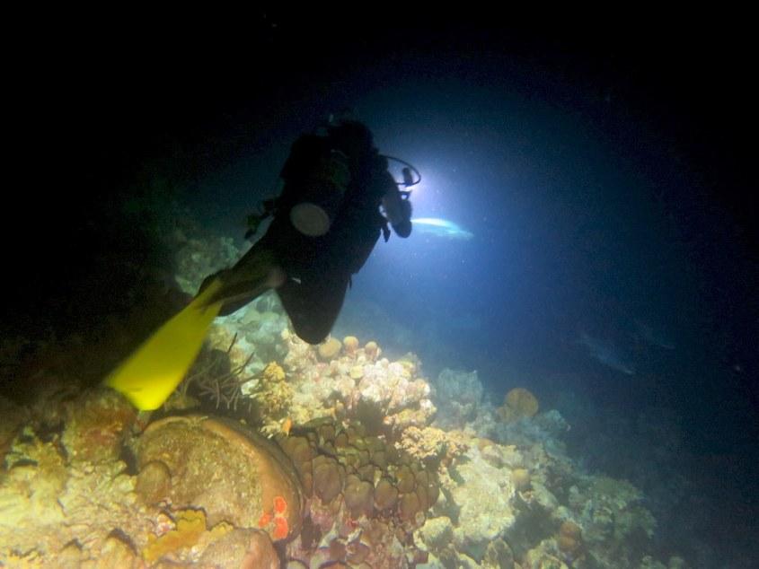 Un plongeur parti de nuit plonger avec les tarpons à Bonaire