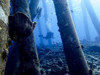 Un plongeur évolue autour des pylônes immergés de Salt Pier à Bonaire