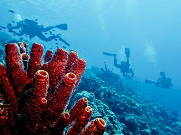 Les contradictions du monde de la plongée nous emmènes parfois vers de drôles de chemins comme pour ces plongeurs à Bonaire
