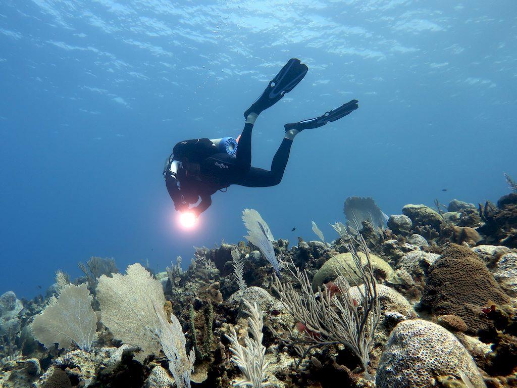 Covid-19 et plongée nécessiteront une reprise raisonnée avant de se retrouver dans l'eu comme ce plongeur en Jamaique