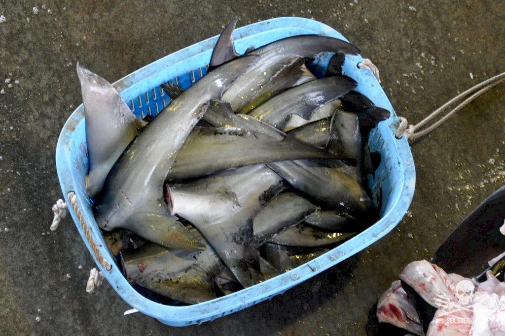 Un bac contenant des ailerons de requins probablement prélevés lors de Shark finning.
