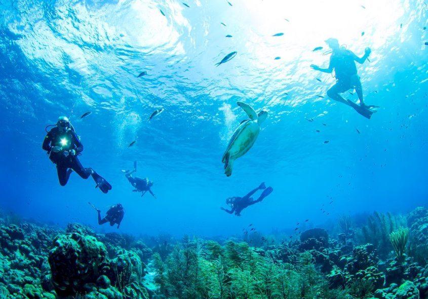 Plonger à Bonaire en 2020 pour aller à la rencontre des tortues