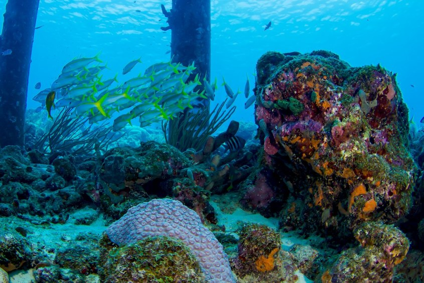 La vie sous-marine que l'on peut rencontrer en alla nt plonger au Salt Pier à Bonaire.