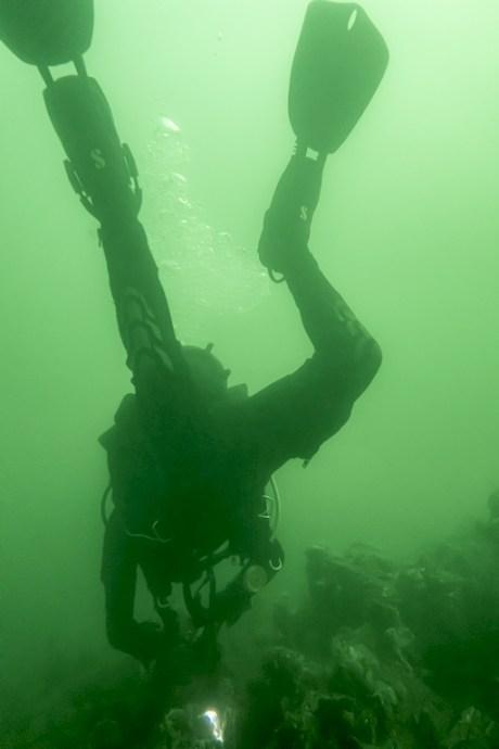 Geoffrey photographie la faune sous marine