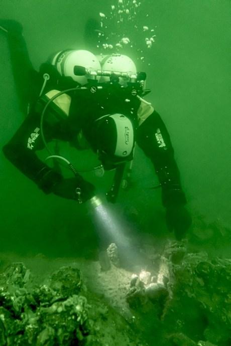 Un plongeur observe la faune en Zélande
