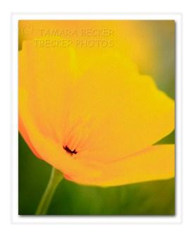 20140402-_DSC1058 framed