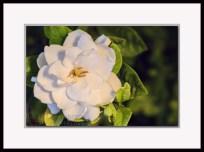 20140503-_DSC1841-framed
