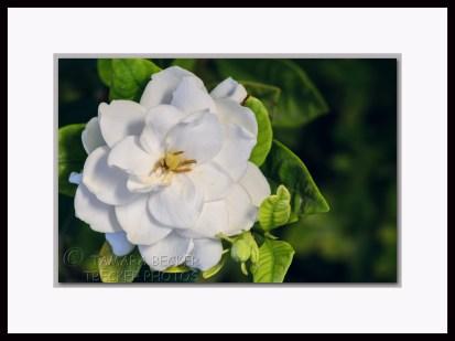 20140503-_DSC1843-framed