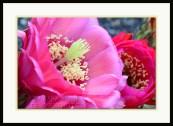 20140507-_DSC1928-framed