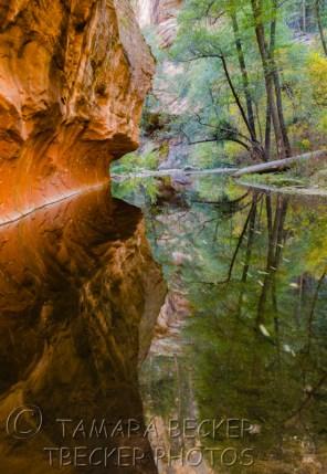 West Fork - Sedona, Arizona