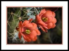orange cactus flower desert botanical garden