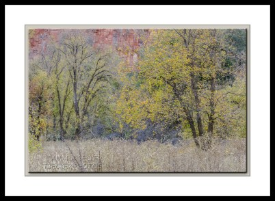west-fork-fall-color=trees-2999