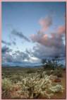 sunrise in the sonoran desert cholla pink sky