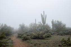 fog in the Sonoran Desert