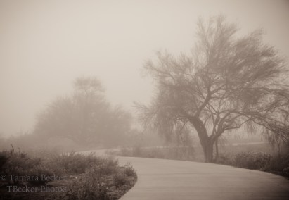 fog in the Sonoran Desert with trees and path