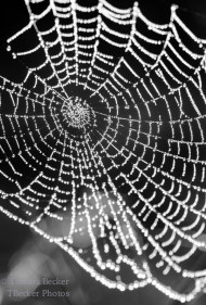 spider web covered in dew drops