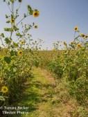 Tallgrass-Prairie-National-Preserve-6543