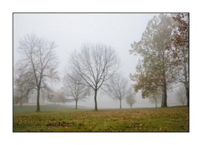 fog-trees-autumn-east-lake-TJB2094