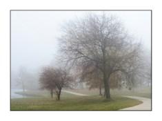 fog-trees-path-TJB2133