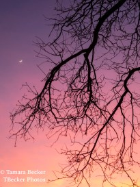 Sunset with moon and tree