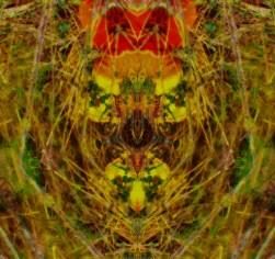 daffodil decay