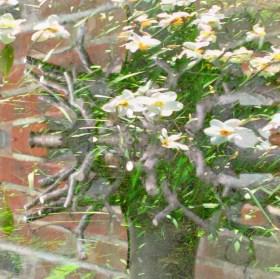 april garden 2