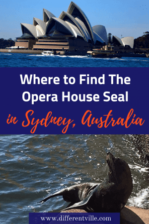 Did you know that there's a seal who sometimes makes his home behind the Sydney Opera House? Here's where to look for Benny the Opera House Seal. #sydney #sydneyoperahouse #operahouseseal