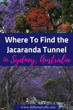 The stunning Jacaranda trees flower all over Sydney in October - but the most Instafamous view of jacaranda is the Jacaranda tree tunnel in Sydney. Click to see where to find it, or save it to one of your boards for later. #sydney #instagramspotssydney #jacarandasydney