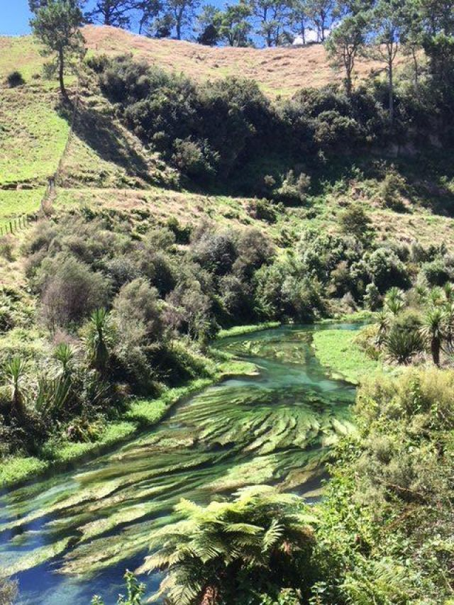 It's an easy day trip from Auckland to Blue Spring Putaruru in New Zealand's North Island - and when you get there it's stunning.