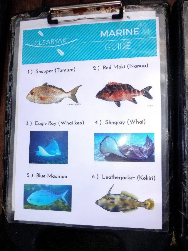 There are six types of fish that live in Goat Island, near Auckland