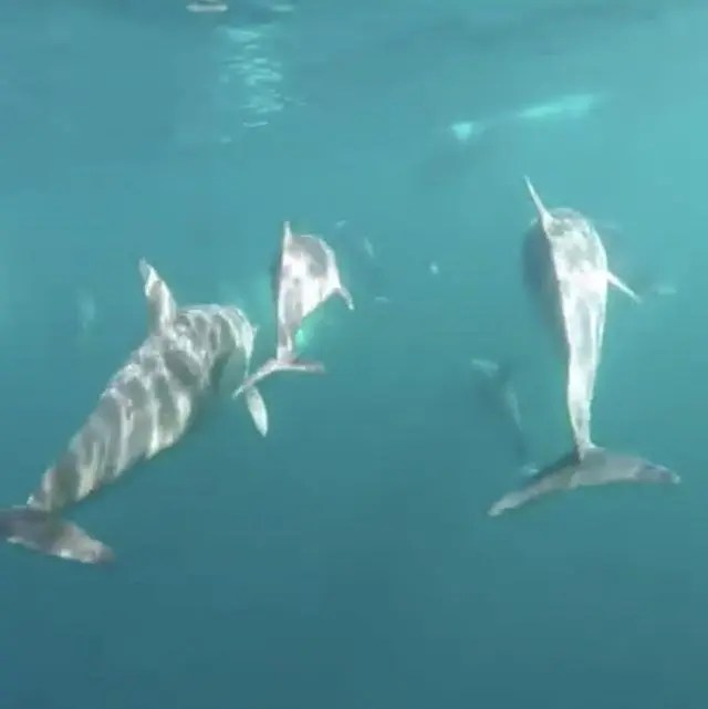 When you go swimming with wild dolphins with Dolphin Swim Australia, it's on their terms not yours.