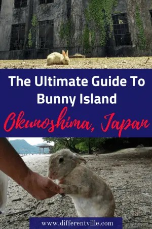 Just off the south coast of Japan, a day trip from Kyoto, Osaka or Hiroshima likes Okunoshima or Bunny Island where over 1000 bunnies are waiting for you to bring them snacks. Here's everything you need to know if you want to visit. Click to read it now, or save to one of your boards for later #okunoshima #thingstodoinjapan #bunnyisland