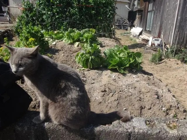 About 150 cats live on Ainoshima Cat Island close to Fukuoka in Western Japan. Here's how to visit them.