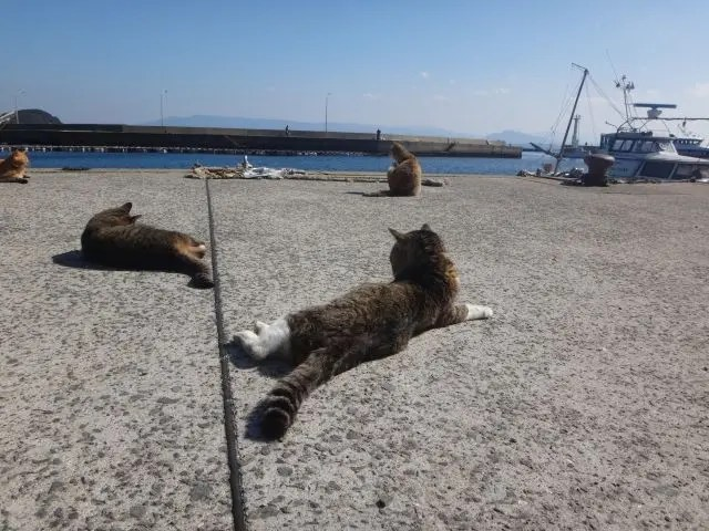 Cats lounging in the sun on Ainoshima, the Fukuoka Cat Island