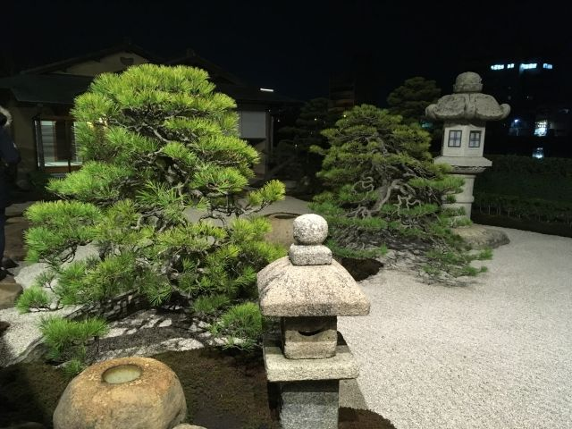 The trees in the garden of MinamiKan restaurant in Matsui are hundreds of years old. They started as bonsai but are now about a metre tall.