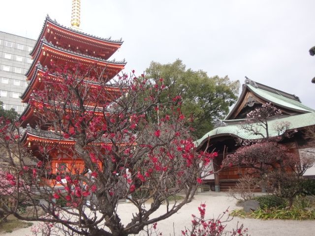 Tochoji Temple is Fukuoka. Image shows a five story red pagoda with a gold stem on top. And a plum tree in full bloom.