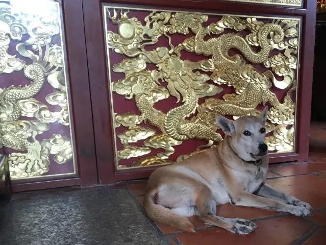 Dog who lives at the Snake Temple, Penang