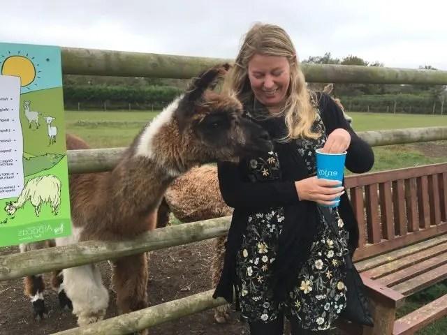 girl feeding a llama