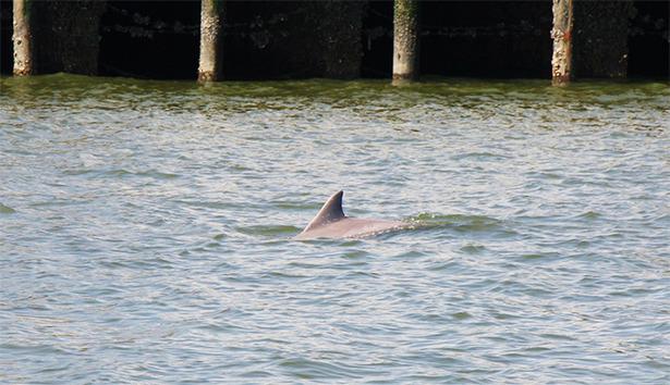 2013 03 12 Killer Dolphins