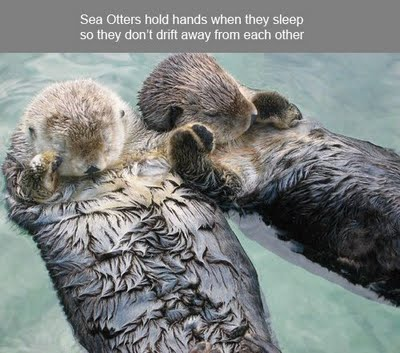 2013-05-01 Sea Otters