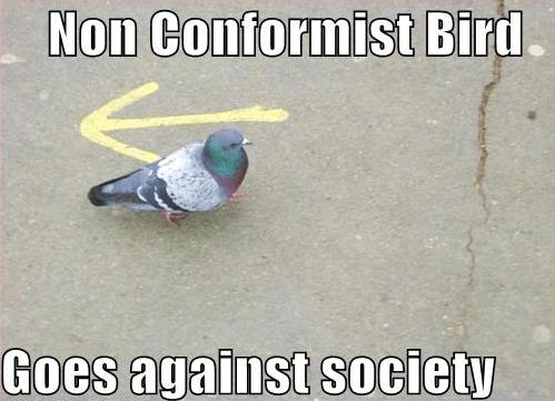 2013-06-04 Nonconformist Bird