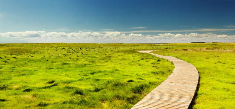 046-paths-we-walk-small