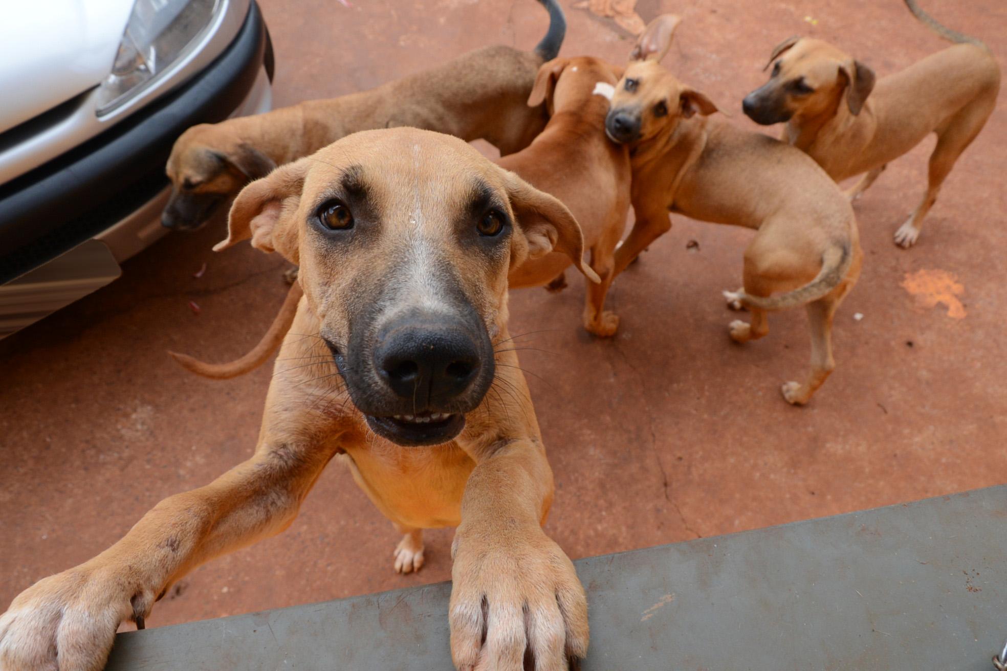 Censo das Vigilâncias Epidemiológica e Sanitária irá mapear os animais domésticos de Assis