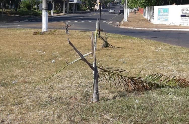 Coqueiros são depredados e Prefeitura lamenta ato de vandalismo