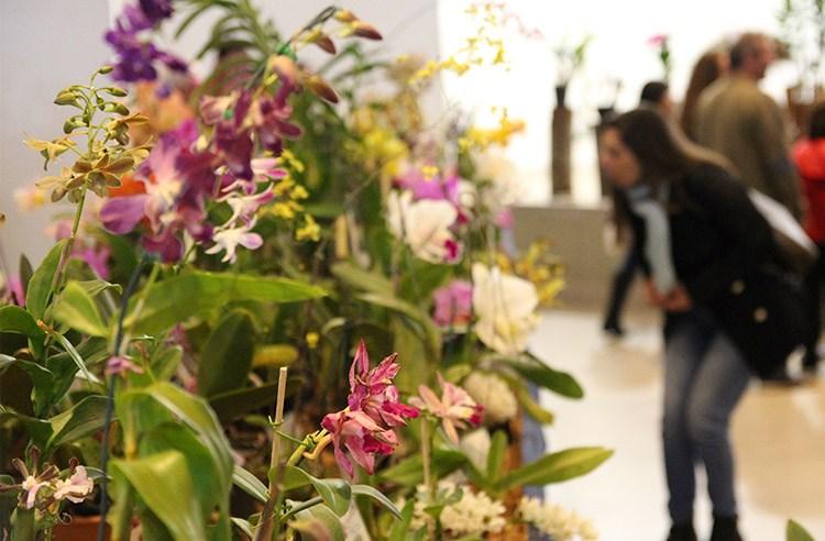 Exibição nacional de orquídeas que aconteceria em julho é cancelada